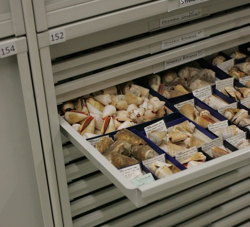 Artefact and Collections Storage